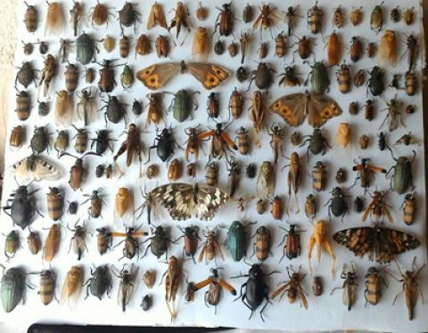 خداحافظی با حشرات خانگی با ترفندهایی ساده