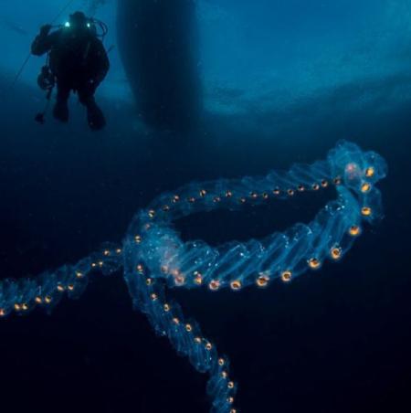 حیوانات عجیب دریا, تصاویر از حیوانات عجیب