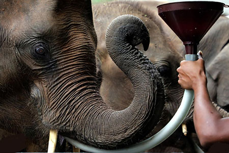 عکسهای جالب,عکسهای جذاب, بچه فیل