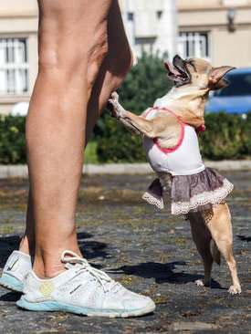 عکسهای جالب,عکسهای جذاب ,حامیان حقوق حیوانات
