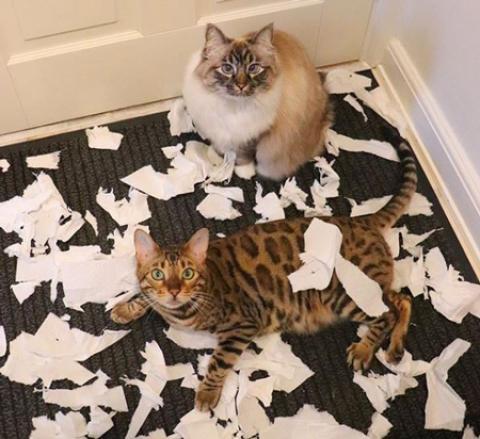 کارهایی که حیوانات خانگی ما انجام می دهند وقتی که پیش آنها نیستیم!!