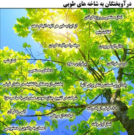 درباره ی درخت طوبی, درخت طوبی در بهشت