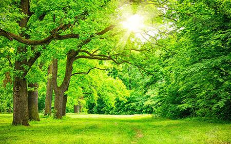آشنایی با نام درختان بهشتی, معرفی درختان بهشتی, همه چیز درباره ی درختان بهشتی