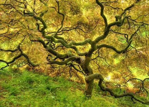 آیا می دانید نام درختان بهشتی چیست؟ نام درختان بهشتی