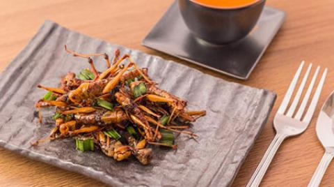 حکم خوردن حشرات