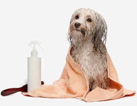 آموزش حمام کردن حیوانات خانگی,آموزش حمام کردن سگ