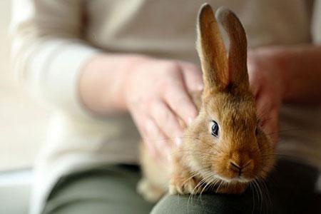 حمام کردن حیوان,آموزش حمام کردن خرگوش