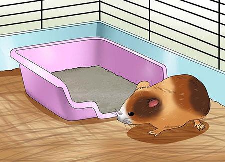 آموزش شستن همستر, مراحل حمام کردن همستر