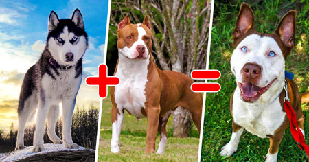 ترکیب کردن نژادهای مختلف سگ ها, آشنایی با سگ ها با نژادهای مختلف