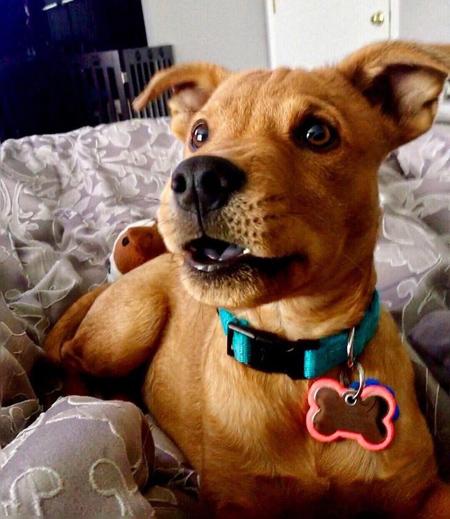 شناخت انواع نژاد سگ ها,آشنایی با نژادهای ترکیبی سگ ها