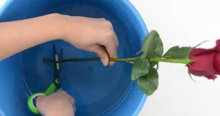 مراحل نگهداری از گل رز,شیوه های نگهداری از گل های رز