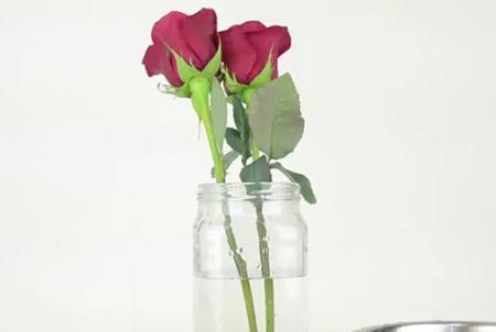 نگهداری شاخه های گل رز,روش نگهداری از شاخه های گل رز