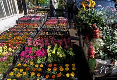 خرید گل برای نوروز