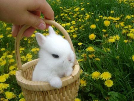 غذا و مکان مناسب نگهداری از خرگوش ها,روش نظافت مکان خرگوش