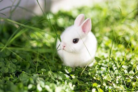 تغذیه مناسب خرگوش ها,مکان مناسب برای نگهداری از خرگوش ها