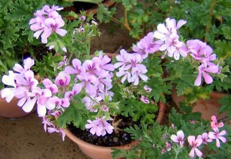 نکته هایی برای پرورش گل های آپارتمانی, نور و آبیاری مناسب گل های آپارتمانی