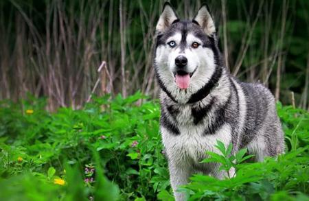 حرف زدن حیوانات,سخن گفتن حیوانات