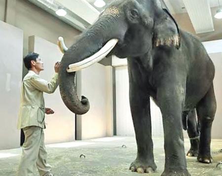 آشنایی با حیواناتی که حرف می زنند, معرفی حیواناتی که حرف می زنند