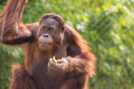 نحوه سخن گفتن حیوانات,حرف زدن حیوانات
