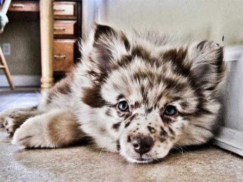 15 نوع سگ از نژادهای ترکیبی