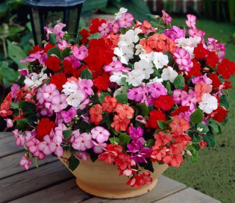 آشنایی با نحوه نگهداری از گل حنا
