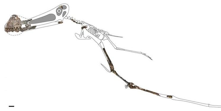 اخبار علمی ,خبرهای علمی,فسیل خزنده پرنده
