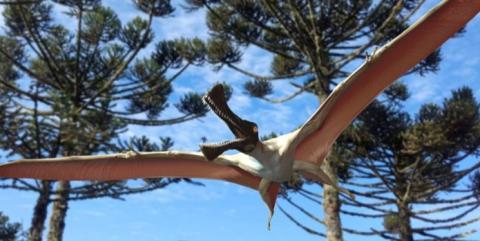 کشف فسیل خزنده پرنده ماقبل تاریخ در استرالیا
