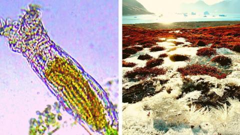 زنده کردن کرمهای منجمد ۲۴ هزار ساله و تولید مثل آنها!