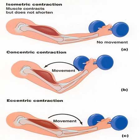 تمرینات اکسنتریک و کنسنتریک آشنایی با تمرینات اکسنتریک و کنسنتریک
