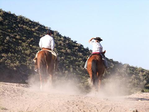 آموزش سوارکاری و اصول اسب سواری