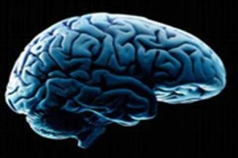 چگونه مغز را ورزش دهیم؟